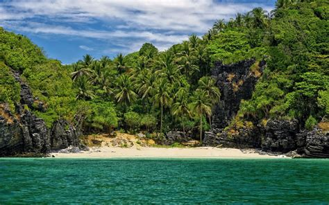ocean island palm trees coast wallpapers ocean island