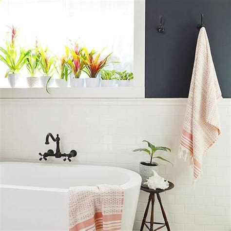 Family Home Decor 11 Plants That Will Grow Better In Your Bathroom
