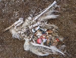 what do birds eat visboo com