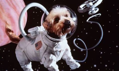 Dogs In Space top ten facts about dogs used on space missions express