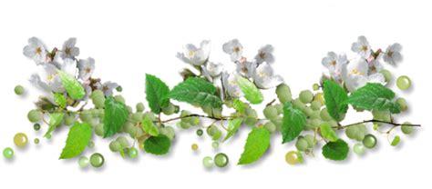 imagenes png naturaleza flores y la naturaleza lineas gif gifs animados flores y