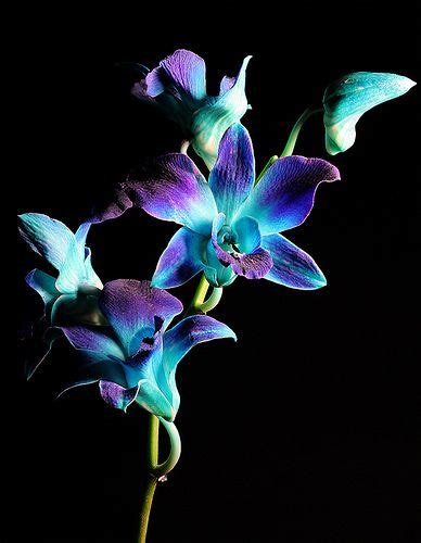 blue orchid tattoo 89 best images about orchids on