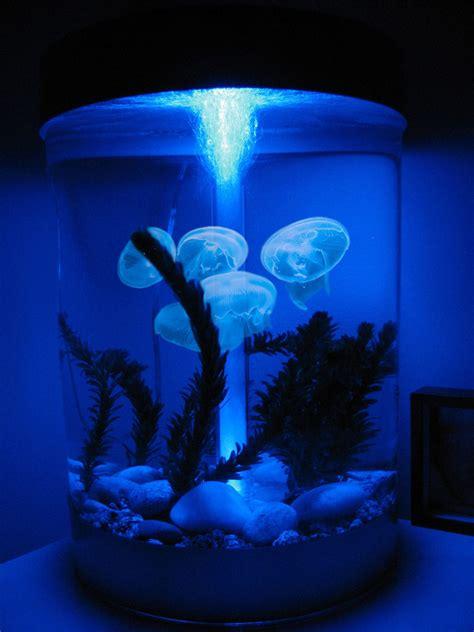 jellyfish home decor 100 jellyfish home decor 100 jellyfish home decor