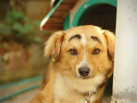 golden retriever eyebrows 43 best images about eyebrows on trends and cats