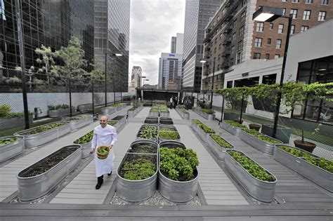 city farming a how to guide to growing crops and raising livestock in spaces books here s why rooftops are the future of farming