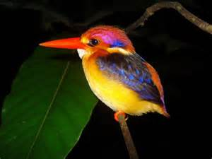 colored birds brightly colored bird feathers inspire new of laser