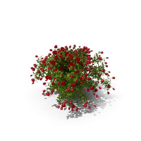 rose bush png images psds   pixelsquid