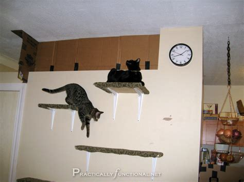 Make Your Own Kitchen Cabinets Carpet Covered Cat Climbing Shelves