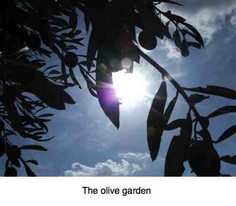Olive Garden Humble by Olive Garden Nutrition Parades The Virtues Of This Humble