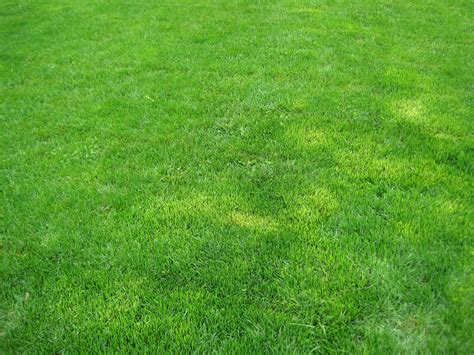 how to grow grass in backyard grass for backyard ideas 14333