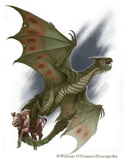 north american dragon the dracopedia project dragon of the month north