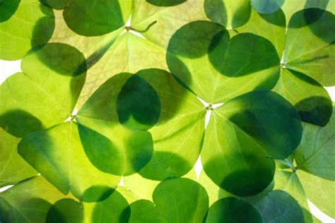 st s day in ireland images st patricks day in united kingdom