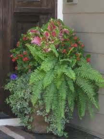 shade planter ferns coleus begonias container