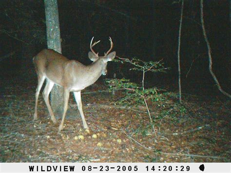 small 6 point buck small 6 point buck dublin
