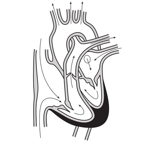 coloring page of arteries arteries of the heart coloring pages