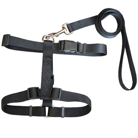 harness leash harness for parakeet harness get free image about wiring diagram
