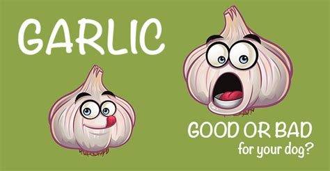 garlic for dogs garlic for dogs or bad petswell pantry