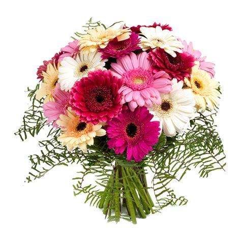 zeno fiori zeno fiori fiori in tutto il mondo