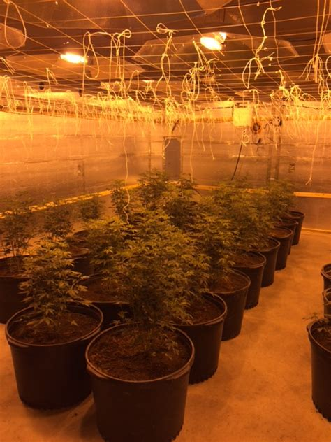 Macon County Warrant Search Photos State Wide Marijuana Network Operated By Cuban