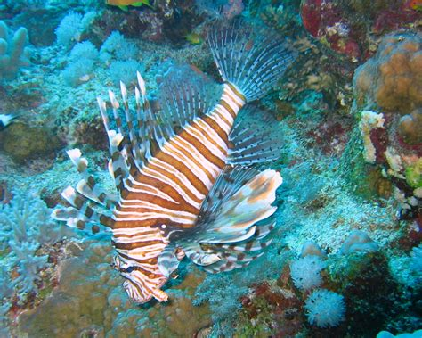 picturespool beautiful fishes wallpaper pictures sea water animals