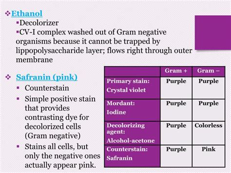 gram negative stain color ppt gram stain powerpoint presentation id 2381303