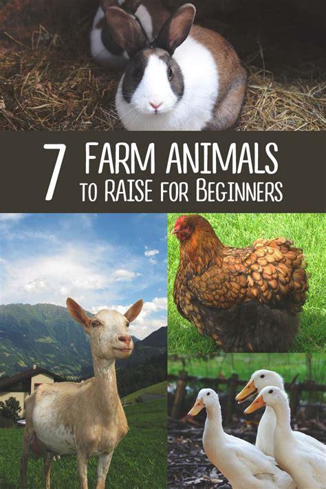 farm animals  raise  youre  starting