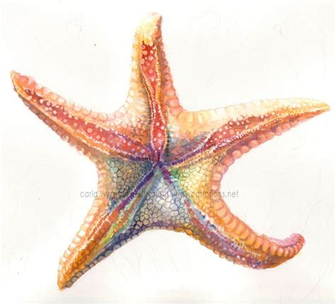 rainbow starfish art print