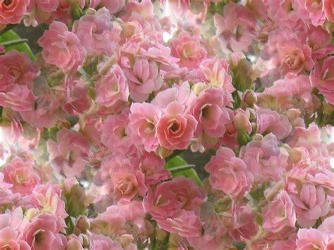 beautiful spring flowers beautiful spring flowers wallpapers wallpapersafari
