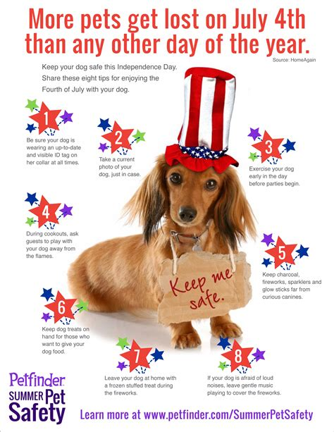 fireworks dogs fireworks safety for pets animal defense league of san antonio animal
