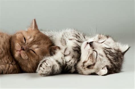 Cat Litter System Australia - best gadget meet the self cleaning cat litter tray