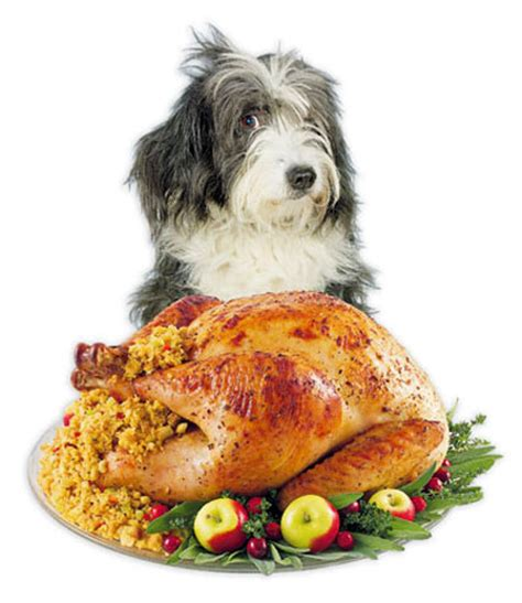 can you give dogs turkey doggie do s and do not s at the holidays feeding fido