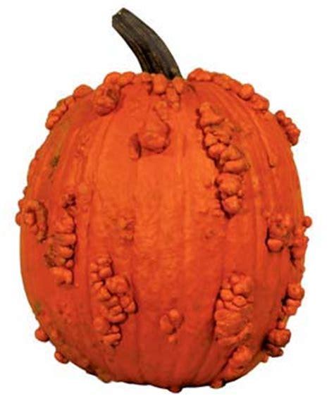 special pumpkins  nipomo pumpkin patch