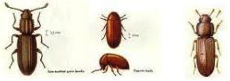 Bugs In Pantry Brown by Brown Centipede Related Keywords Suggestions Brown