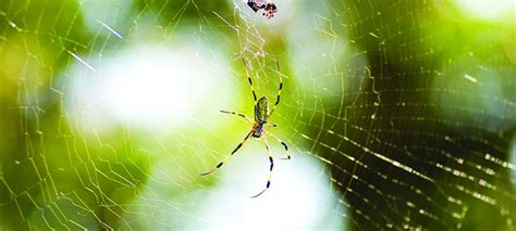 Garden Spider Benefits Garden Spider Benefits 28 Images About Yellow Jackets