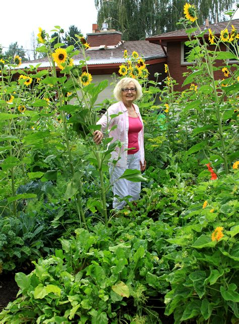 garden lasagna gardening yields big harvest