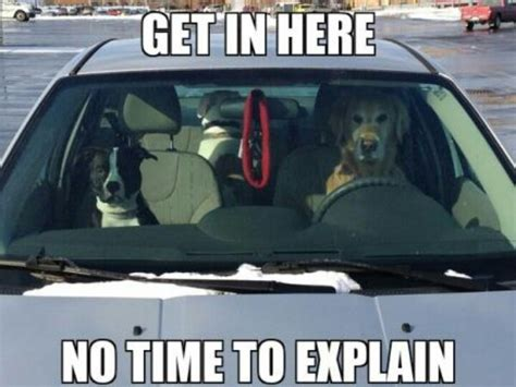 No Time To Explain Meme - 25 best images about i love memes no time to explain on pinterest cars funny animals with