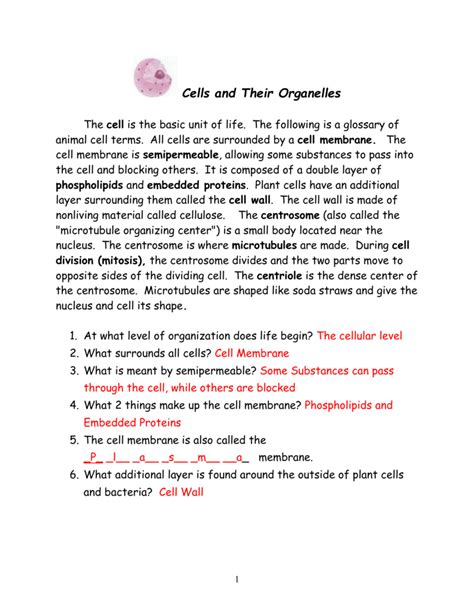 Cells And Their Organelles Worksheet Answers by Cells And Their Organelles Worksheet Answers