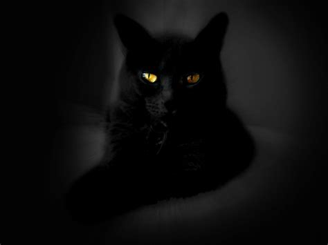 wallpaper cat black wallpaperswide9 blogspot com free hd desktop wallpapers