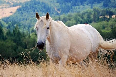 white mustang horse outstanding wild white mustang mare wild free pinterest