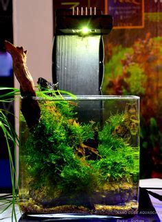 1000 images about cube aquascape ideas on