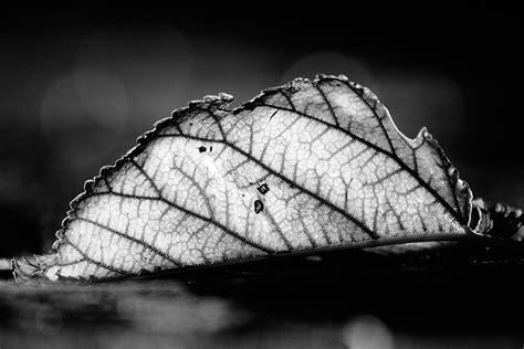 imagenes de hojas a blanco y negro contraste en blanco y negro by javi superstar on deviantart