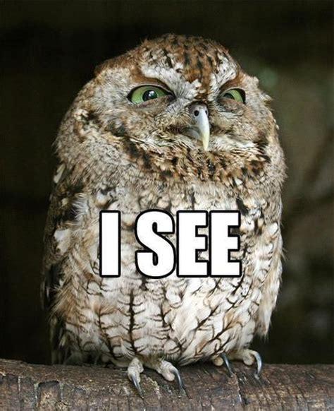 Owl Meme - 20 hilariously adorable owl memes awesome pinterest