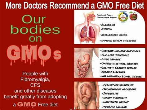 are gmos bad for your health if you re asking this question you re probably missing the point 17 best images about fight against gmo s on health farmers and other countries