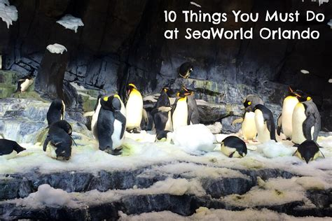 5 things guys must do before they buy an engagement ring 10 things you must do at seaworld orlando kidventurous