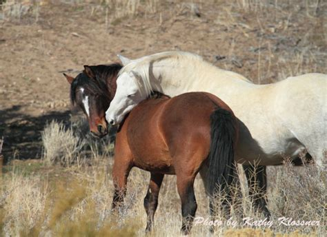 pictures of mustang horses pictures of mustang horses mustang pics