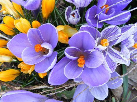 immagini di ci di fiori come utilizzare i fiori di bach per gestire le tue emozioni