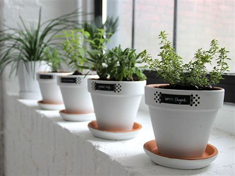 window herb planter best 25 window herb gardens ideas on indoor