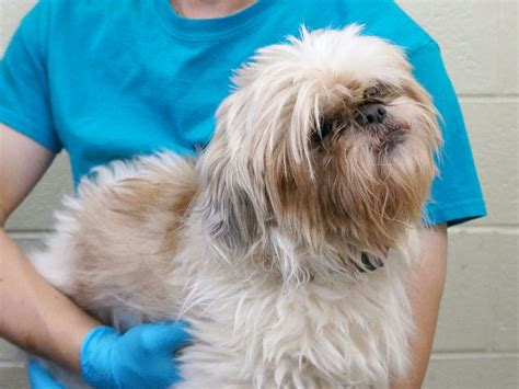 shih tzu food allowed 1000 ideas about breeds list on breed names breed info and