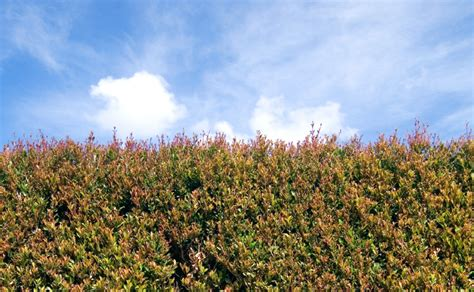 backyard bliss lilly pilly melbourne privacy plants burke s backyard