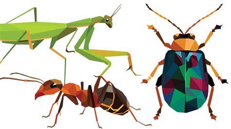 bug three aktif 2017 bugs galore western australian museum